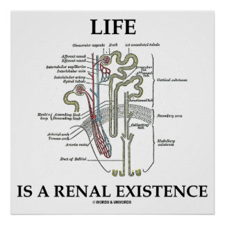 Life Is A Renal Existence (Kidney Nephron) Poster