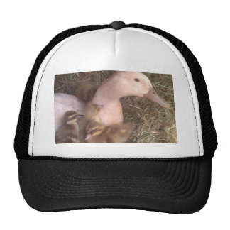 Life is just ducky cap