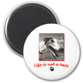 Life is NOT a Race Magnet