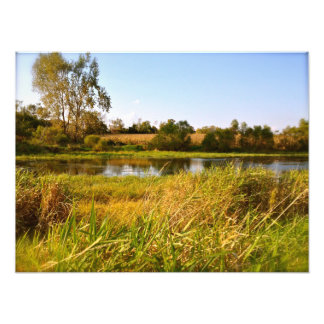Life on the pond (1) Photo Print