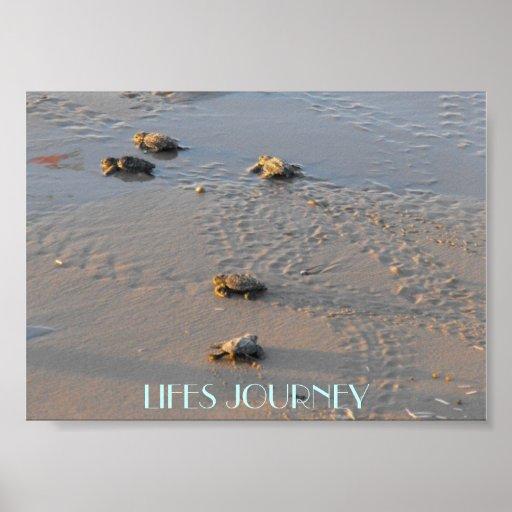 lifes  journey sea turtles posters