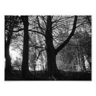 Light and Shade Photo Print