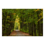 Light At The End Of A Tunnel Of Trees Poster