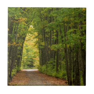 Light At The End Of A Tunnel Of Trees Small Square Tile