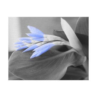 Light Blue Buds selective color Canvas Print