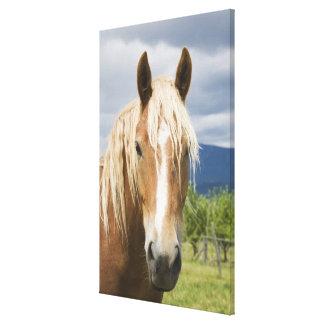 Light Brown Horse Canvas Print