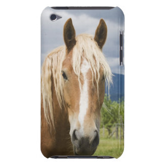 Light Brown Horse iPod Case-Mate Case