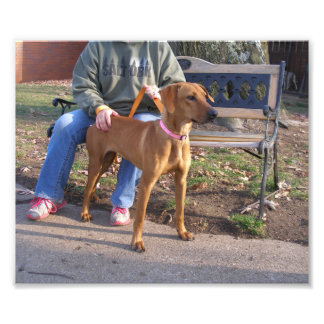Light Brown Hound Dog Standing Outside Photo Print