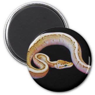 Light Colored Ball Python Magnet