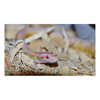 Light Colored Corn Snake Business Cards