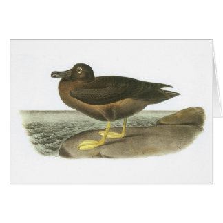 Light-mantled Sooty Albatross by Audubon Greeting Card