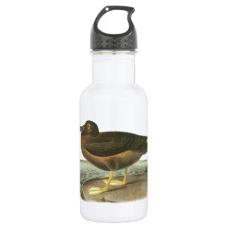 Light-mantled Sooty Albatross by Audubon 532 Ml Water Bottle