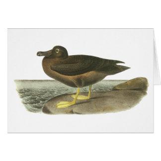 Light-mantled Sooty Albatross, John Audubon Greeting Card