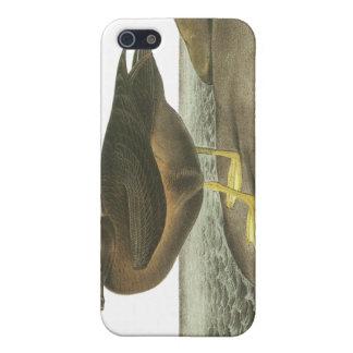 Light-mantled Sooty Albatross, John Audubon Covers For iPhone 5