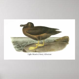 Light-mantled Sooty Albatross, John Audubon Print