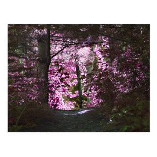 Light On Path Nature Postcard