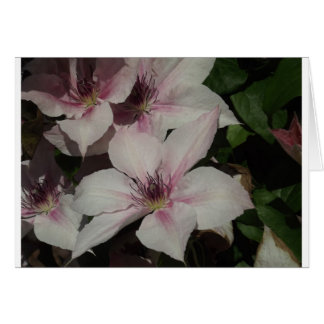 Light Pink Clematis Blossom Greeting Card