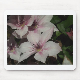Light Pink Clematis Blossom Mouse Pad