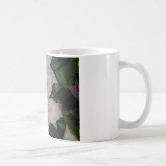 Light Pink Clematis Blossom Basic White Mug