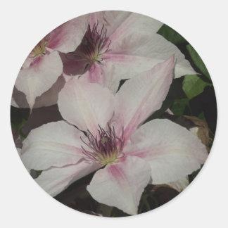 Light Pink Clematis Blossom Round Sticker