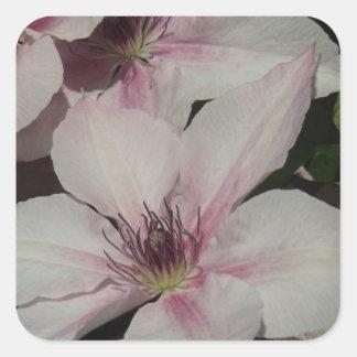 Light Pink Clematis Blossom Square Sticker