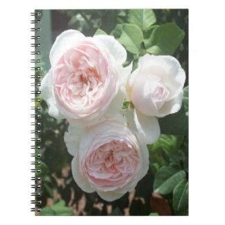 Light Pink English Roses Spiral Photo Notebook