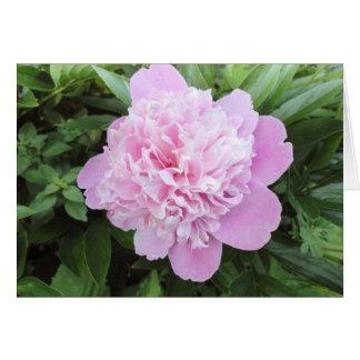 LIght Pink Peony Garden Greeting Card