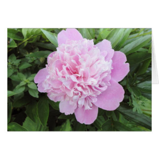 LIght Pink Peony Garden Greeting Card