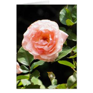 Light pink rose card