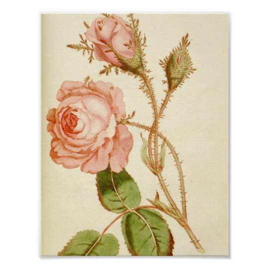 Light Pink Rose Floral Poster