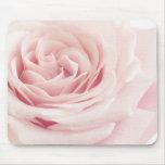 Light Pink Rose Flower - Roses Flowers Floral