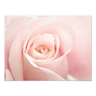 Light Pink Rose Flower - Roses Flowers Floral Photograph