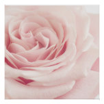 Light Pink Rose Flower - Roses Flowers Floral Poster