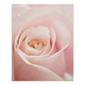 Light Pink Rose Flower - Roses Flowers Floral Posters