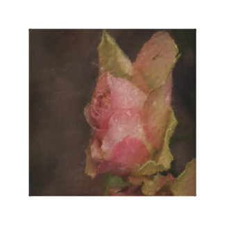 Light Pink Rose Oil Painting Stretched Canvas Prints