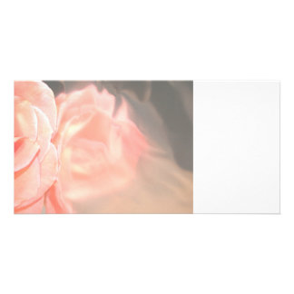 Light pink rose reflection in silver photo cards