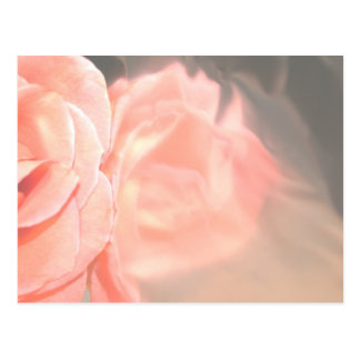 Light pink rose reflection in silver postcard