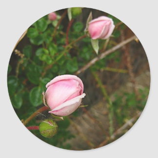 Light Pink Rosebuds Round Sticker