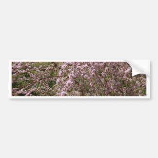 Light Pink Tree Blossom Bumper Stickers
