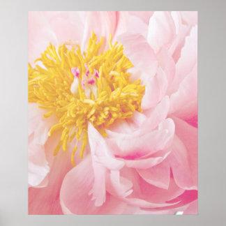Light Pink Yellow Peony Flower - Peonies Flowers Posters