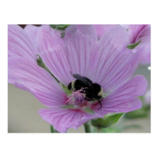 Light Purple Flower With Bee Postcard