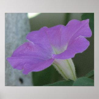 Light Purple  Petunia Poster