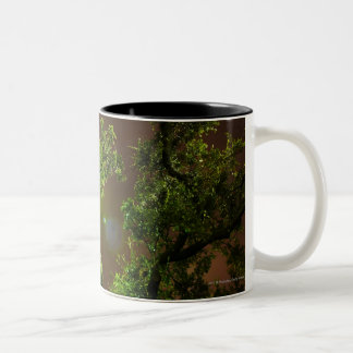 Light Through Trees at night Two-Tone Coffee Mug