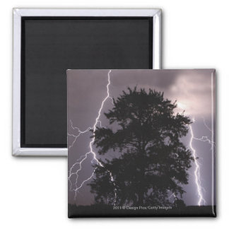 Lightning Strikes In The Sky Behind A Tree Magnet