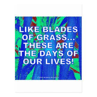 LIKE BLADES OF GRASS POSTCARD