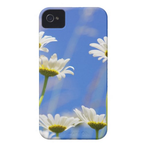 Liking rites sky Leucanthemum vulgare iPhone 4 Cover