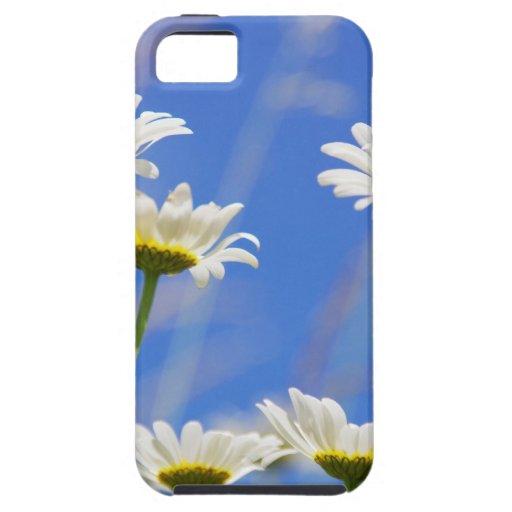 Liking rites sky Leucanthemum vulgare iPhone 5 Covers