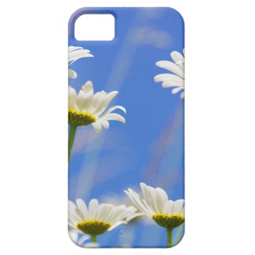 Liking rites sky Leucanthemum vulgare iPhone 5 Cases