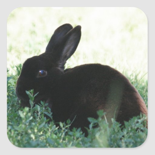 Lil Black Bunny Square Stickers