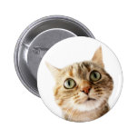 Lil Miss Cattitude Pinback Buttons